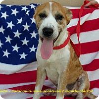 Adopt A Pet :: Alfalfa - Jacksonville, TX
