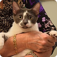 Adopt A Pet :: Truman - Huntington, NY
