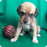 Adopt A Pet :: Angola - Alpharetta, GA