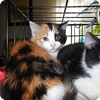 Adopt A Pet :: Kayla - CARVER, MA