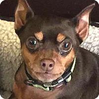 Adopt A Pet :: JORDAN - Westmont, IL