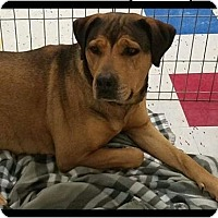 Adopt A Pet :: Bonnie - Las Vegas, NV