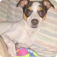Adopt A Pet :: Lando (WI) - Lansing, MI