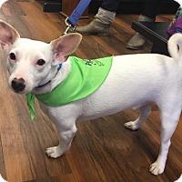 Adopt A Pet :: Healy - Centreville, VA
