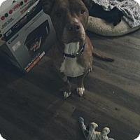 Adopt A Pet :: Rusty - Dallas, TX