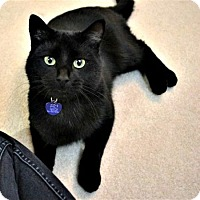 Adopt A Pet :: Mickie - Edmonton, AB