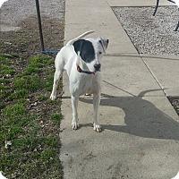 Adopt A Pet :: Zoey - Paris, IL