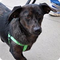 Adopt A Pet :: Tink - Madison, AL