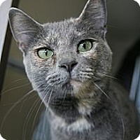 Adopt A Pet :: Minnie - Frederick, MD