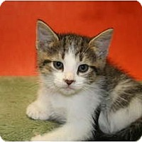 Adopt A Pet :: EMILY - SILVER SPRING, MD