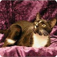 Adopt A Pet :: Rachel - Sacramento, CA
