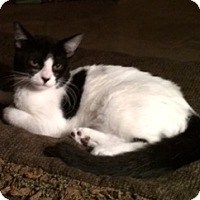 Adopt A Pet :: PICKLES - Higley, AZ
