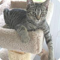 Adopt A Pet :: Toby - Colmar, PA