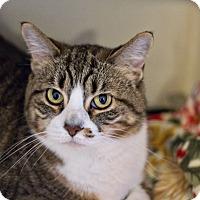 Adopt A Pet :: Maggie - Lincoln, NE