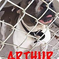 Adopt A Pet :: Aruther - Waycross, GA