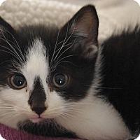 Adopt A Pet :: Angel - Brockton, MA