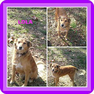 Collie/Border Collie Mix Dog for adoption in Malvern, Arkansas - LOLA