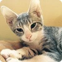 Adopt A Pet :: Perry - Delmont, PA