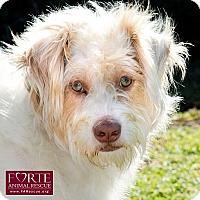 Adopt A Pet :: Mizzy - Marina del Rey, CA