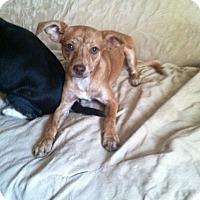 Adopt A Pet :: Monarch - Visalia, CA