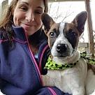 Adopt A Pet :: Tessie