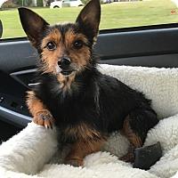 Adopt A Pet :: Bree - Huntsville, AL