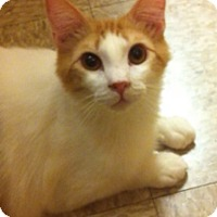 Adopt A Pet :: Tangerine - Lake Elsinore, CA