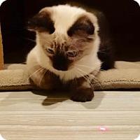 Adopt A Pet :: Elsa - Greeley, CO