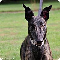 Adopt A Pet :: Boc's On Looker - Carol Stream, IL