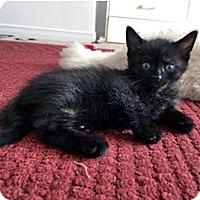 Adopt A Pet :: Endo - Mississauga, Ontario, ON