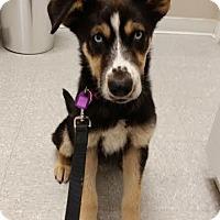 Adopt A Pet :: Jax-Adopted - Saskatoon, SK