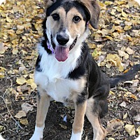 Adopt A Pet :: PIXIE - Westminster, CO