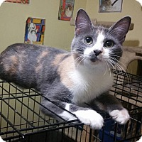 Adopt A Pet :: Minerva - Atlanta, GA