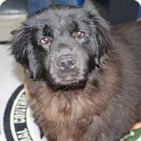 Adopt A Pet :: 23386 - Waverly - Ellicott City, MD