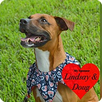 Adopt A Pet :: Hobby - San Leon, TX