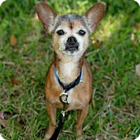 Adopt A Pet :: SASHA - West Palm Beach, FL