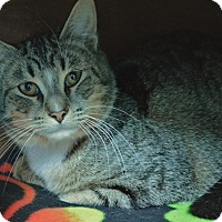 Adopt A Pet :: Sony - Evansville, IN