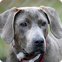 Adopt A Pet :: Sully - Asheville, NC