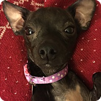 Adopt A Pet :: Bettina - Rancho Santa Fe, CA