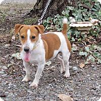 Adopt A Pet :: STRYKER - Bedminster, NJ