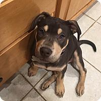 Adopt A Pet :: Reesie - Oakland, MI