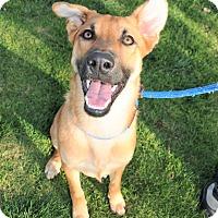 Adopt A Pet :: Zoey - Agoura Hills, CA