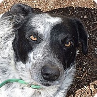 Adopt A Pet :: May - Red Bluff, CA