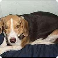 Adopt A Pet :: Tinkerbelle - Phoenix, AZ