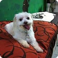 Adopt A Pet :: George - Goleta, CA