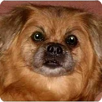Adopt A Pet :: Annie-NJ - Mays Landing, NJ