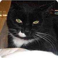 Adopt A Pet :: Mira - Riverside, RI