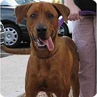 Adopt A Pet :: McQueen - Scottsdale, AZ