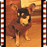Adopt A Pet :: Frankie - Hartsville, TN