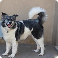 Adopt A Pet :: Doris Day - Norwalk, CT